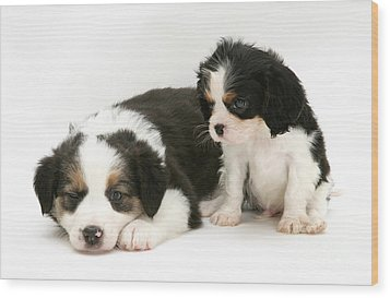 Puppies Wood Print by Jane Burton