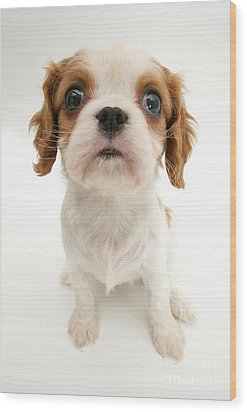 Puppy Wood Print by Jane Burton