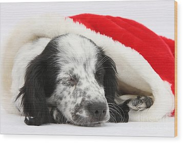 Puppy Sleeping In Christmas Hat Wood Print by Mark Taylor