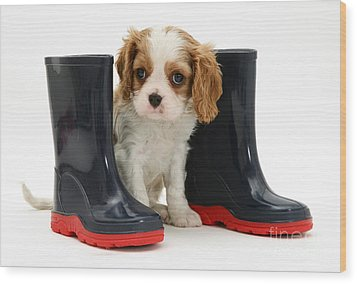 Puppy With Rain Boots Wood Print by Jane Burton