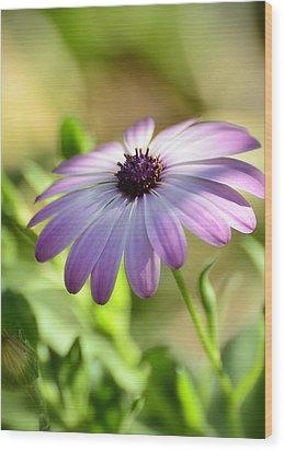 Purple Daisy  Wood Print by Saija  Lehtonen