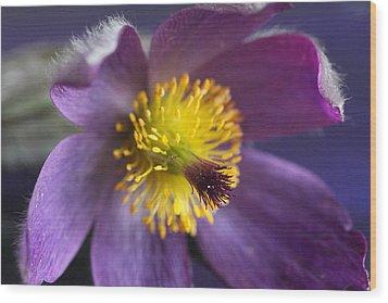 Purple Flower Wood Print by Mark J Seefeldt