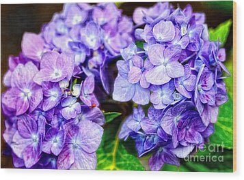 Purple Hydrangea Wood Print by Gina Cormier
