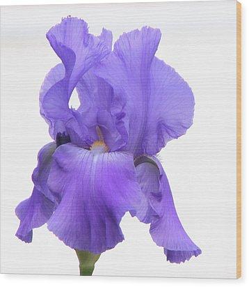 Purple Iris On White Wood Print