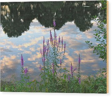 Purple Loosestrife Wood Print by Mary McAvoy