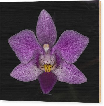 Wood Print featuring the photograph Purple Orchid by Charles Dana