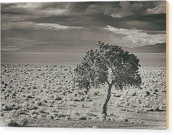 Pyramid Lake, Nevada, Usa Wood Print by Mel Curtis