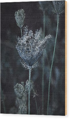 Queen Anne's Lace Wood Print by Bonnie Bruno