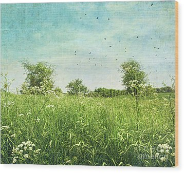 Queen Anne's Lace Wildflowers Wood Print by Sandra Cunningham