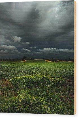 Rain Wood Print by Phil Koch