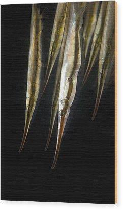 Razorfish Wood Print by Matthew Oldfield
