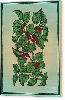 Red Mulberry Wood Print by Science Source