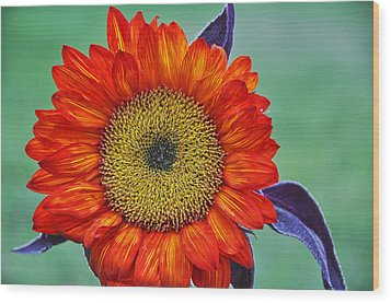 Red Sunflower  Wood Print by Saija  Lehtonen