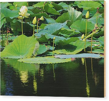 Reflecting Waters Wood Print by Bruce Bley
