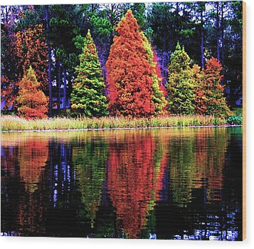 Reflections Wood Print by Carrie OBrien Sibley
