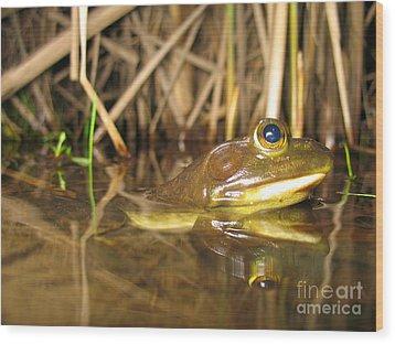 Resting Bullfrog Wood Print by Ted Kinsman