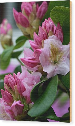 Rhododendron In Bloom Wood Print by Valia Bradshaw