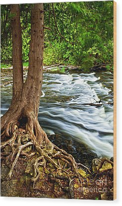 River Through Woods Wood Print by Elena Elisseeva
