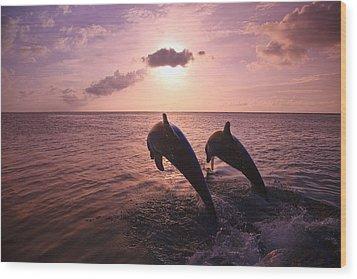Roatan, Bay Islands, Honduras Two Wood Print by Stuart Westmorland