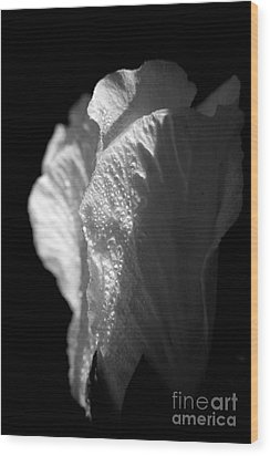 Wood Print featuring the photograph Rose Of Sharon by Jeannette Hunt