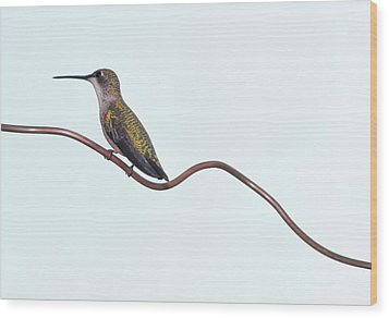 Ruby Throated Hummingbird Wood Print by Jim McKinley