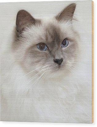 Sacred Birman Cat With Blue Eyes Wood Print by MariaR