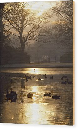 Saint Stephens Green, Dublin, Co Wood Print by The Irish Image Collection