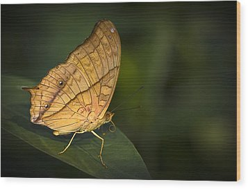 Saturn Butterfly Wood Print