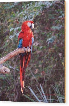 Scarlet Macaw Wood Print by DiDi Higginbotham