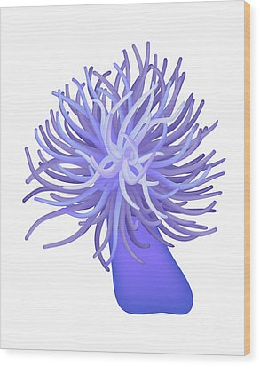 Sea Anemone Wood Print by Michal Boubin