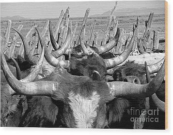 Sea Of Horns Wood Print by Megan Chambers