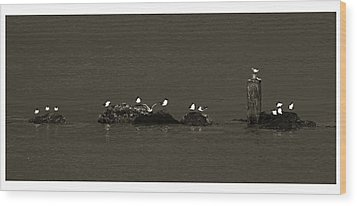 Wood Print featuring the photograph Seagulls On Rocks- St Lucia by Chester Williams