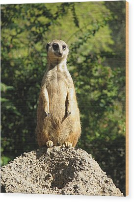 Wood Print featuring the photograph Sentinel Meerkat by Carla Parris
