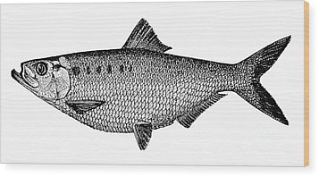 Shad Wood Print by Granger