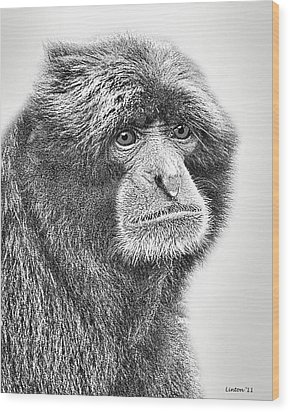 Siamang Wood Print by Larry Linton