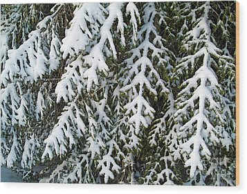 Snowy Fir Tree Wood Print by Sami Sarkis