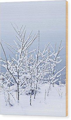Snowy Trees Wood Print by Elena Elisseeva