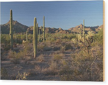 Sonoran Desert Scene With Saguaro Wood Print by George Grall