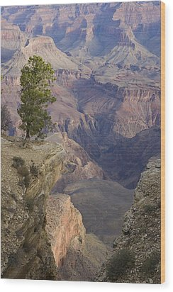 South Rim, Grand Canyon, Arizona, Usa Wood Print by Peter Adams