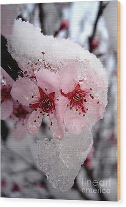 Wood Print featuring the photograph Spring Blossom Icicle by Kerri Mortenson