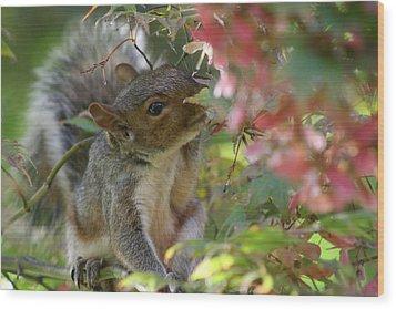 Squirrel In Fall Wood Print by Valia Bradshaw