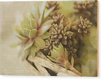 Succulents Wood Print by Bonnie Bruno