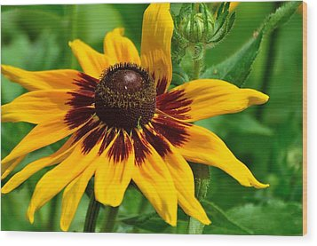Sunflower Wood Print by Kathy King
