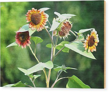 Sunflower Power Wood Print by Bill Cannon
