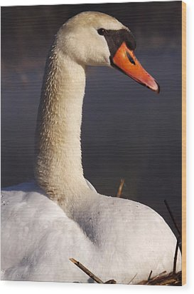 Wood Print featuring the photograph Swan Lake 1 by Gerald Strine