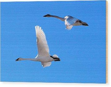 Swans On Blue Sky Wood Print by Don Mann