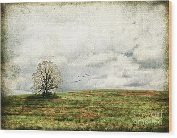 The Lone Tree Wood Print by Darren Fisher