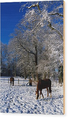 Thoroughbred Horses, Mares In Snow Wood Print by The Irish Image Collection