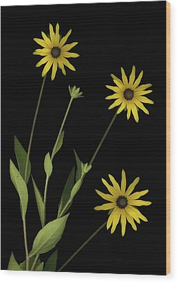 Three Yellow Flowers Wood Print by Deddeda