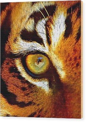 Tigers Eye Wood Print by Marlo Horne